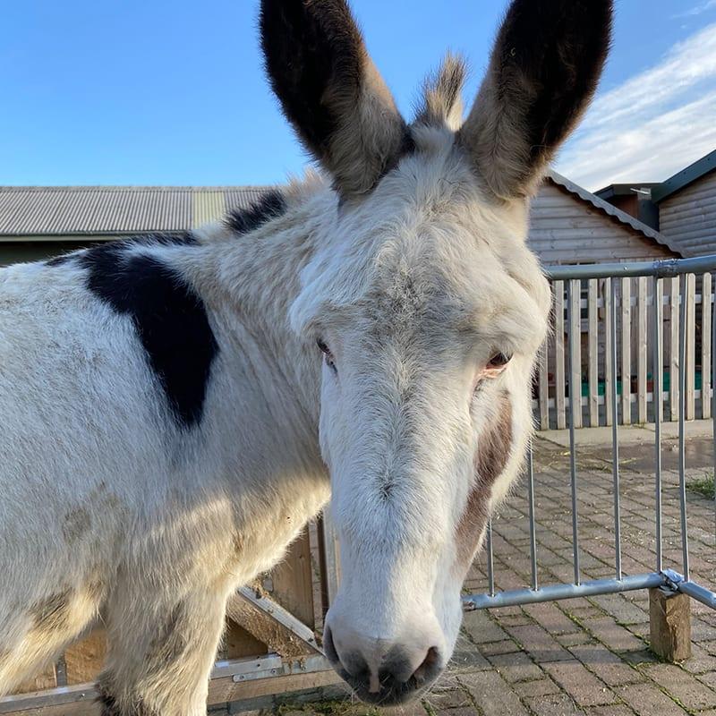 robbie-wonkey-donkey-visitors-centre