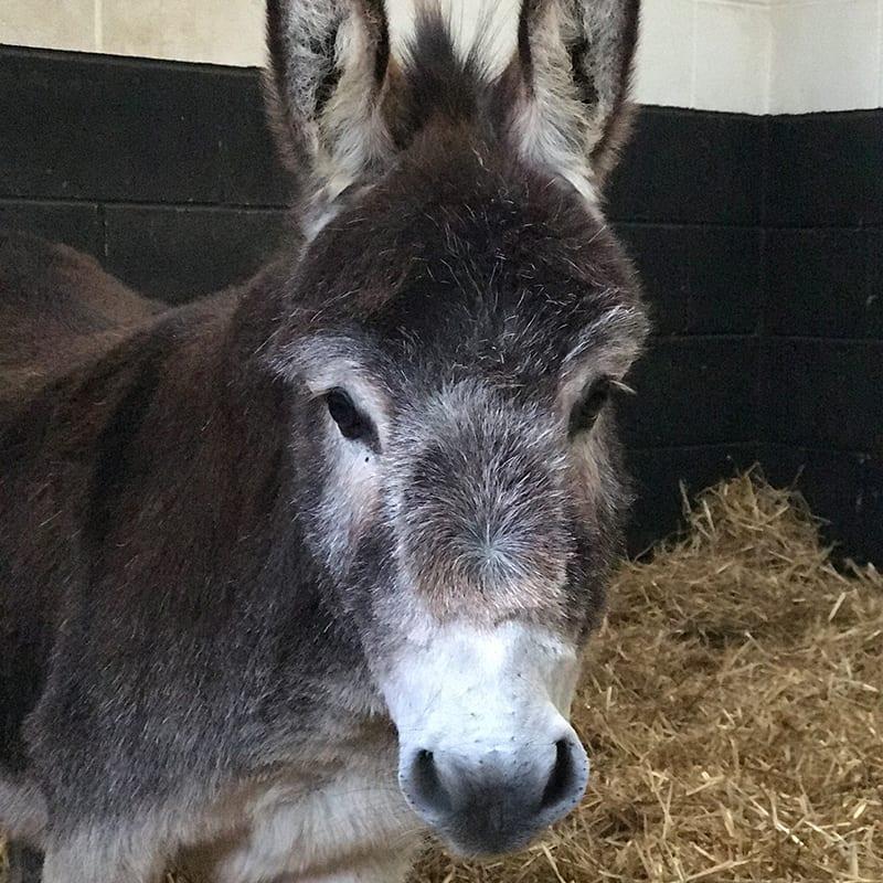 alice-wonkey-donkey-visitors-centre