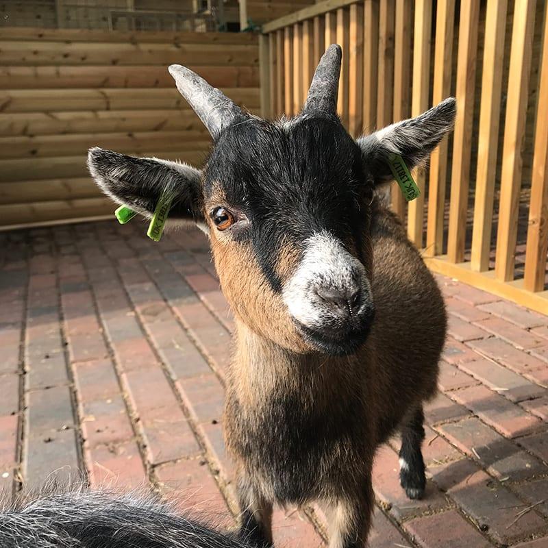 brandy-wonkey-donkey-visitors-centre