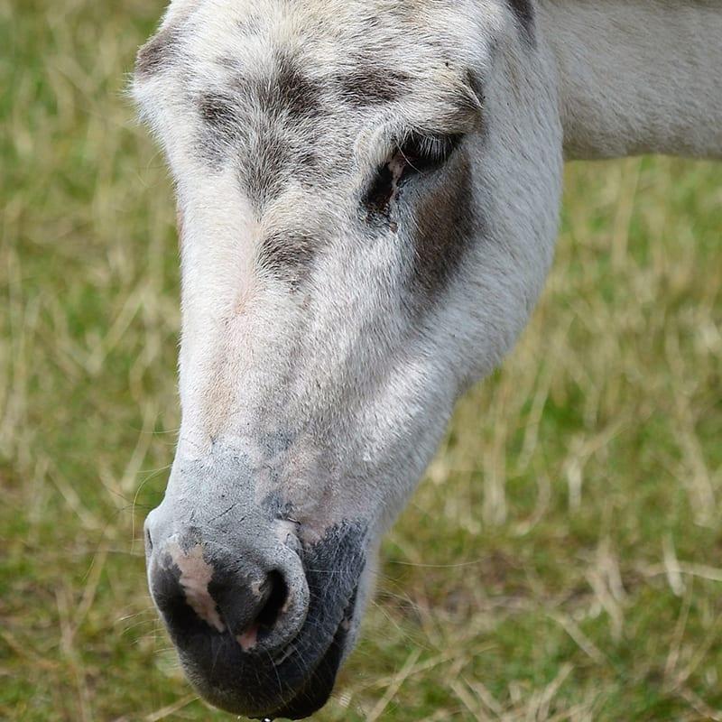 bridget-wonkey-donkey-visitors-centre