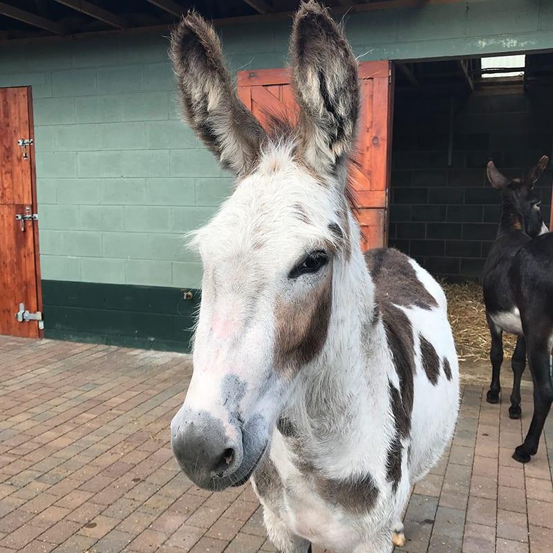 buttons-wonkey-donkey-visitors-centre