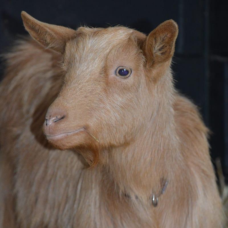caramel-wonkey-donkey-visitors-centre