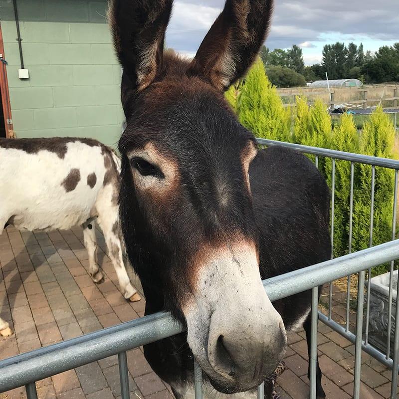 cocoa-wonkey-donkey-visitors-centre