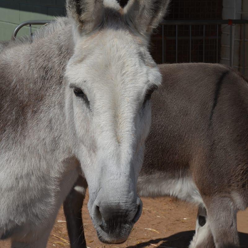 fred-wonkey-donkey-visitors-centre