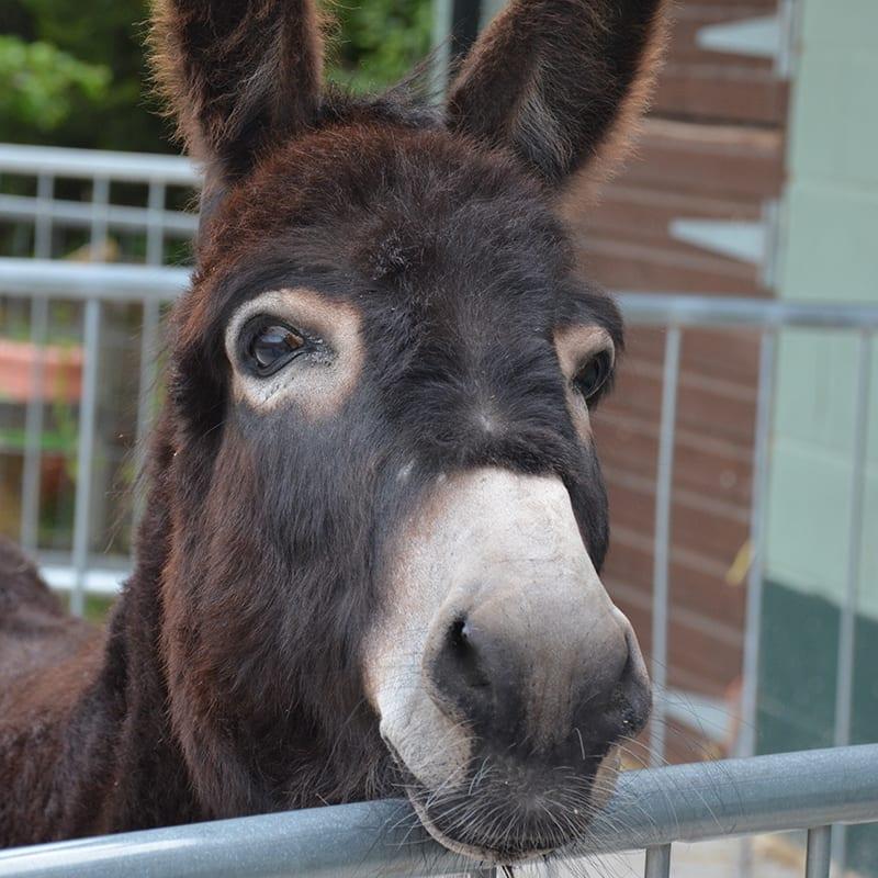 jack-wonkey-donkey-visitors-centre