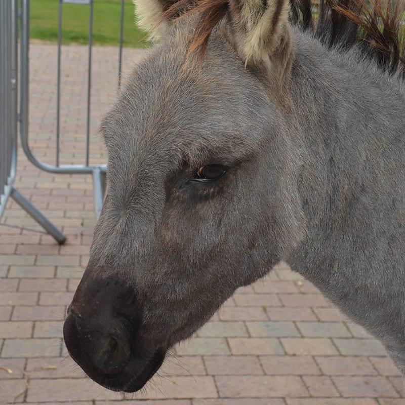 jacob-wonkey-donkey-visitors-centre