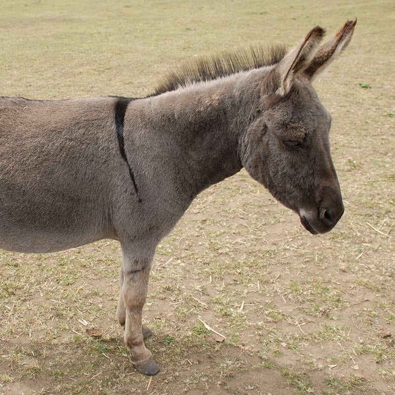 jessica-wonkey-donkey-visitors-centre