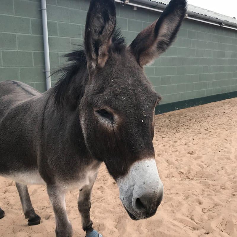 joe-wonkey-donkey-visitors-centre