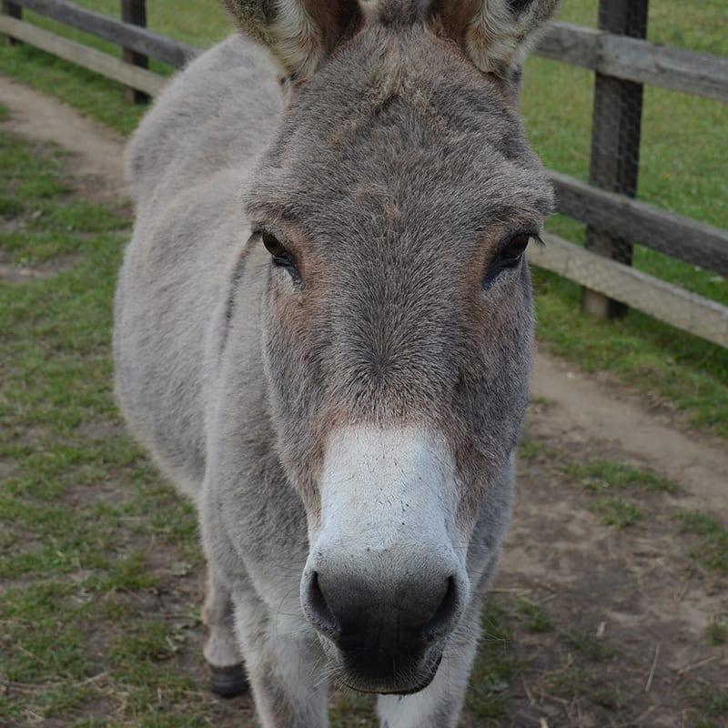 johnny-wonkey-donkey-visitors-centre