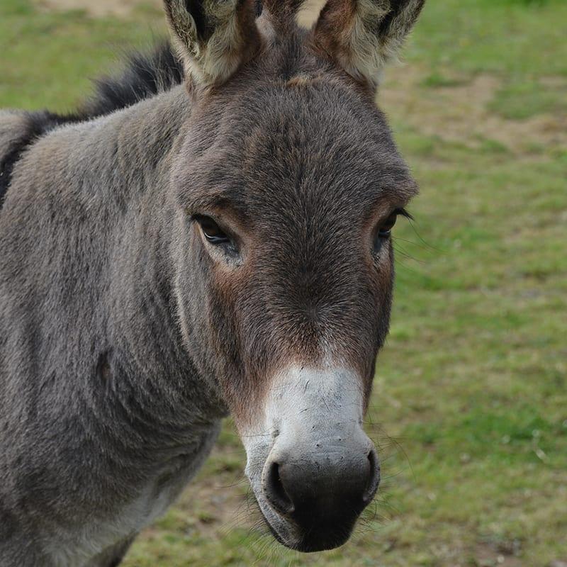 magic-wonkey-donkey-visitors-centre