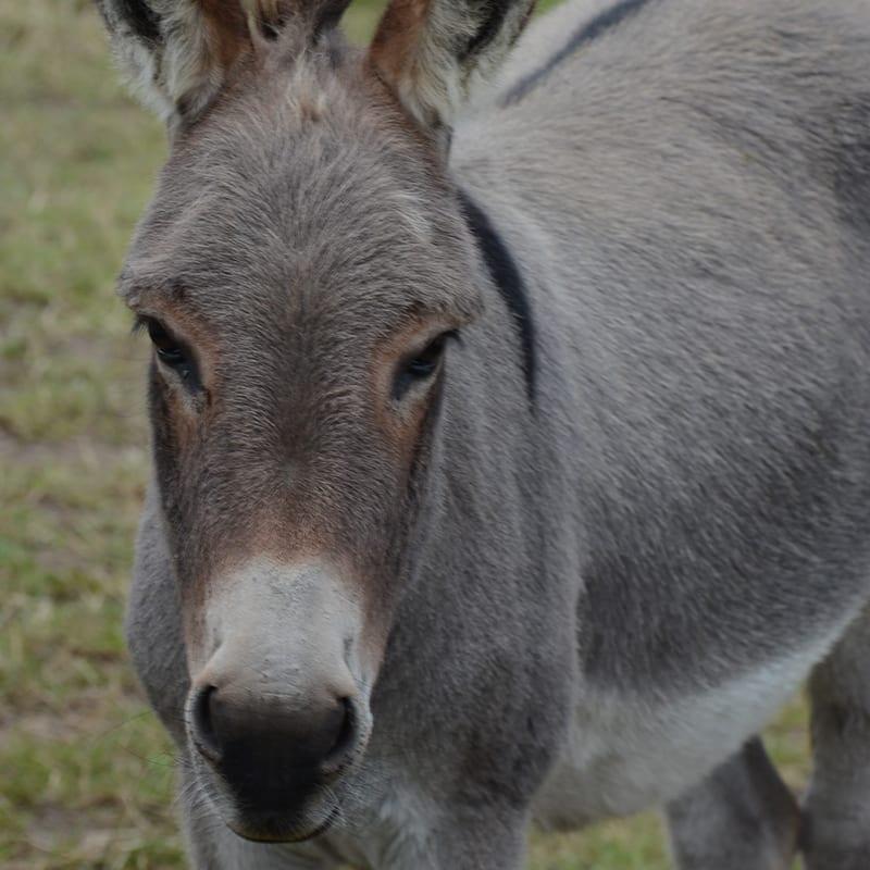 poppy-wonkey-donkey-visitors-centre