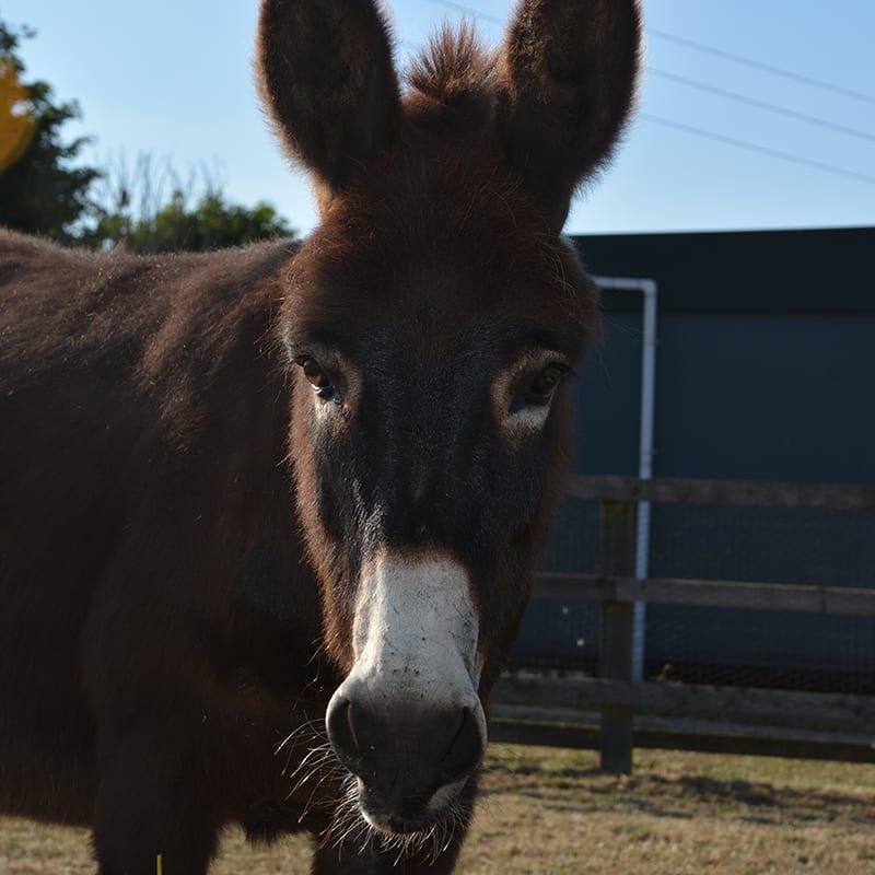 rolo-wonkey-donkey-visitors-centre