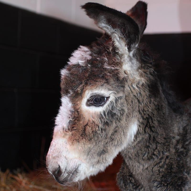 rosie-wonkey-donkey-visitors-centre
