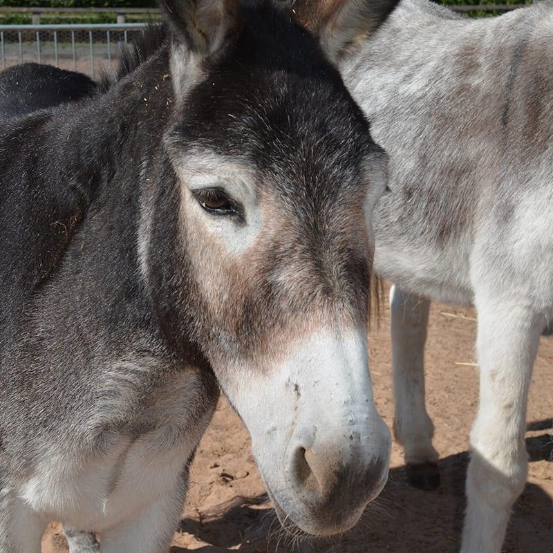 sparky-wonkey-donkey-visitors-centre