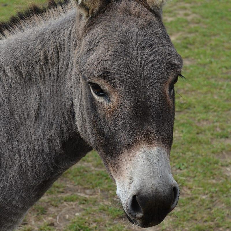 tippi-wonkey-donkey-visitors-centre