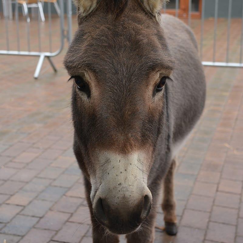 tommy-wonkey-donkey-visitors-centre