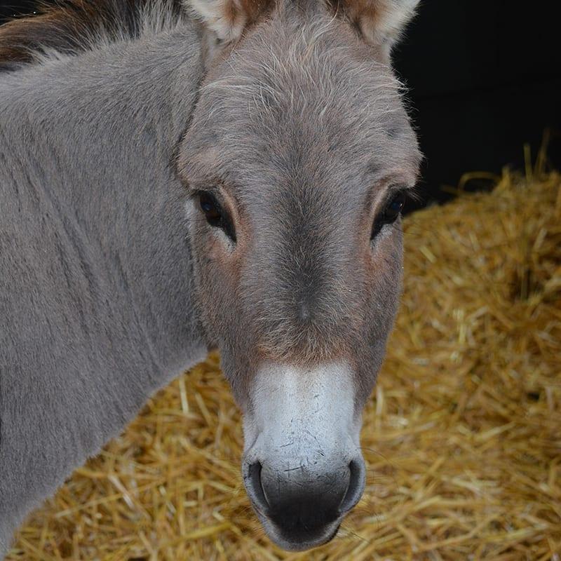 topaz-wonkey-donkey-visitors-centre