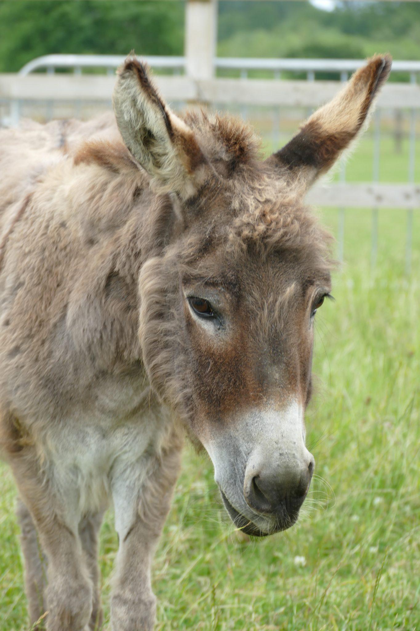 angel-wonkey-donkey-visitors-centre