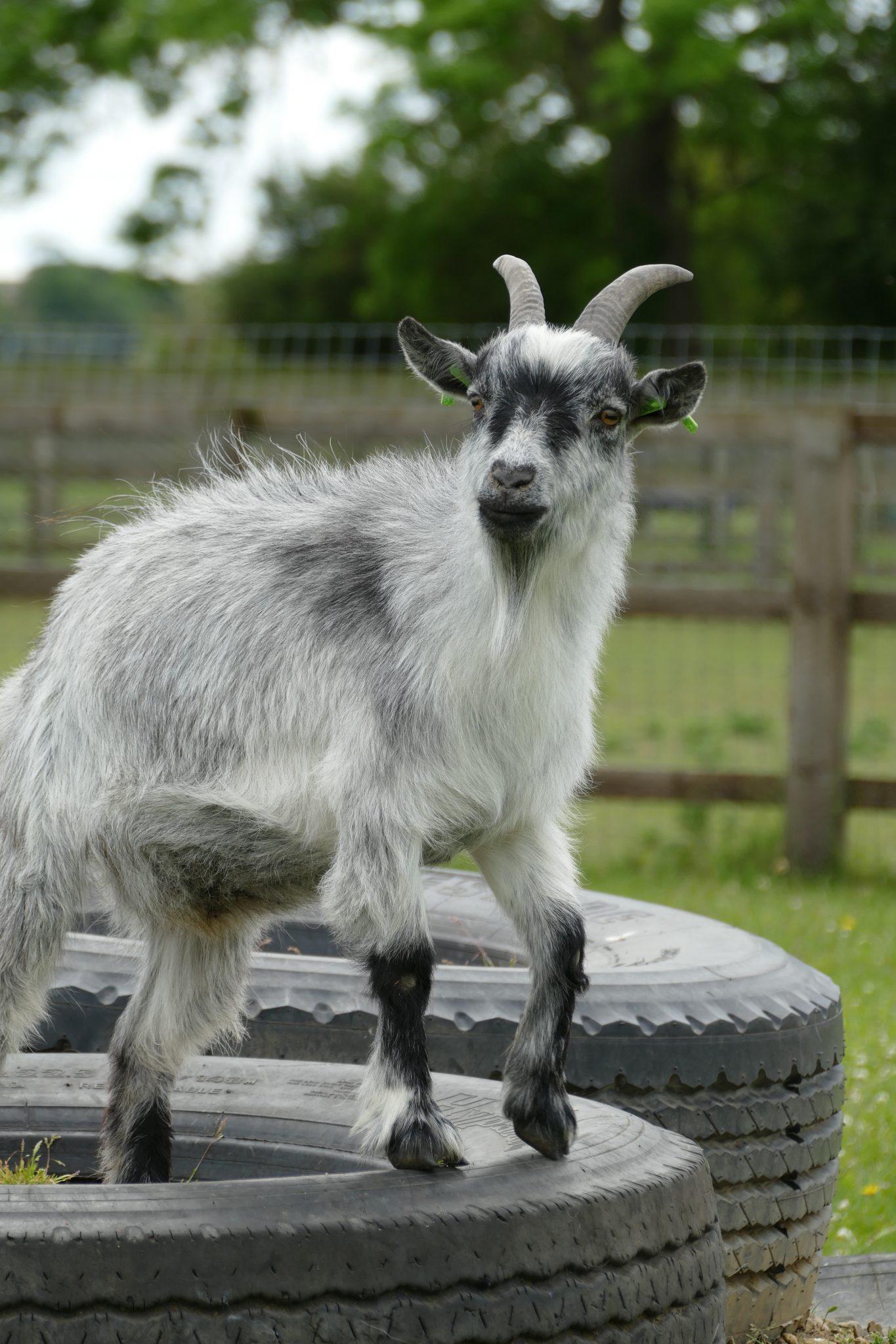 bailey-wonkey-donkey-visitors-centre