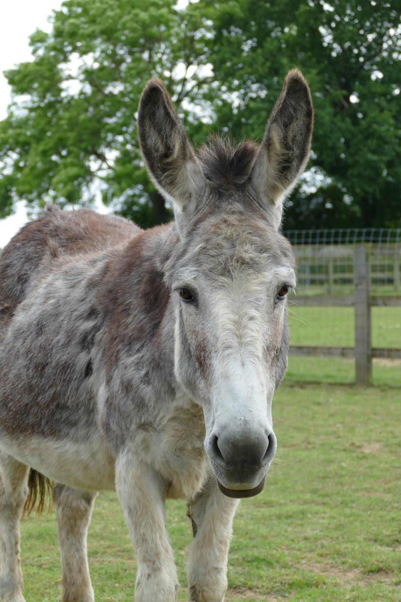 bluebell-wonkey-donkey-visitors-centre