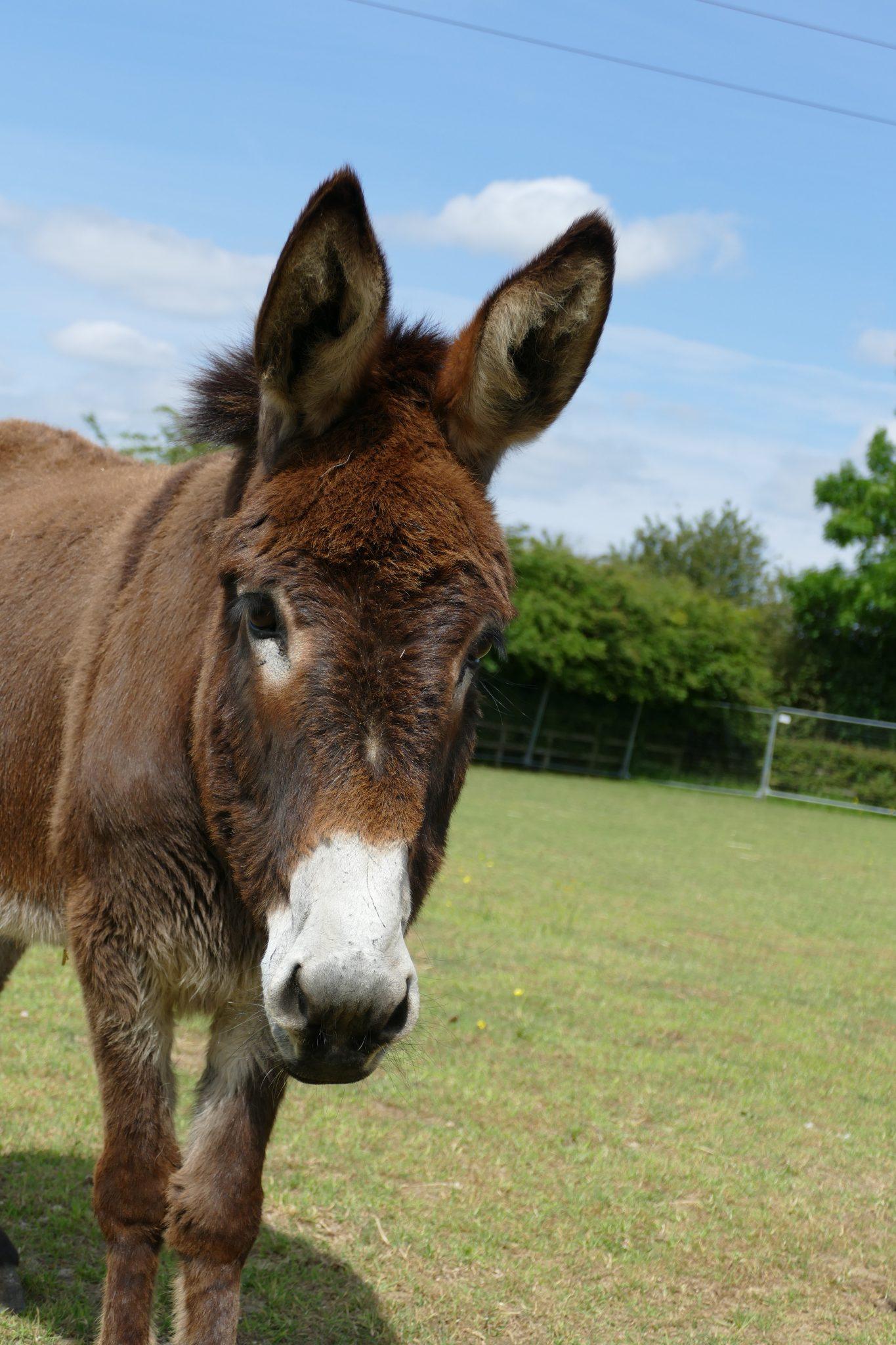 bonnie-wonkey-donkey-visitors-centre