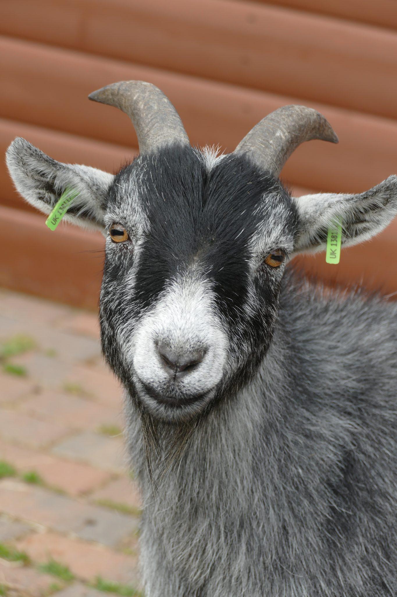 brin-wonkey-donkey-visitors-centre