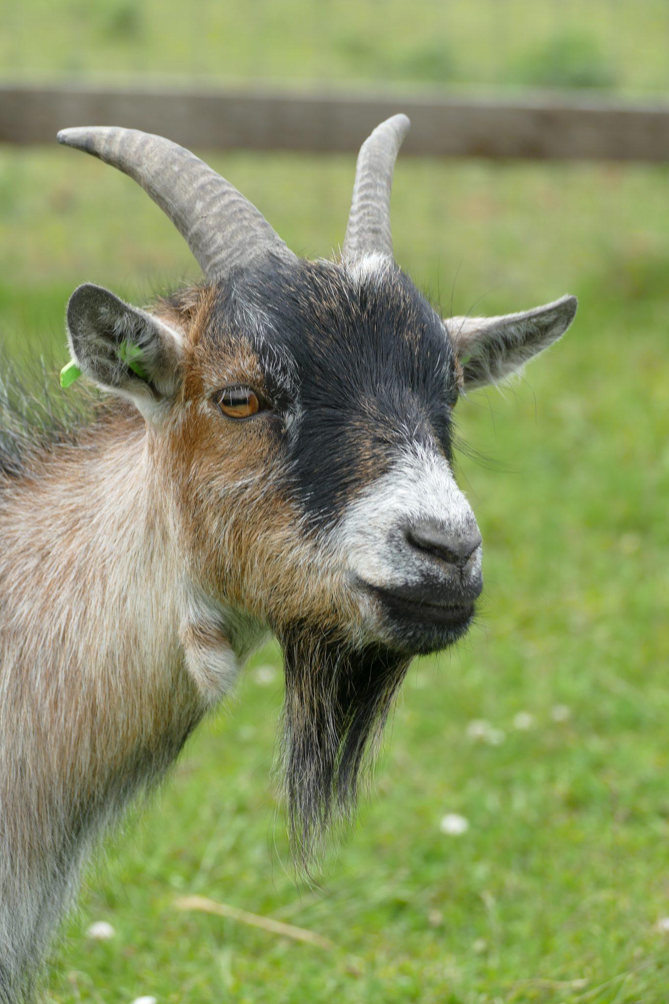 brody-wonkey-donkey-visitors-centre