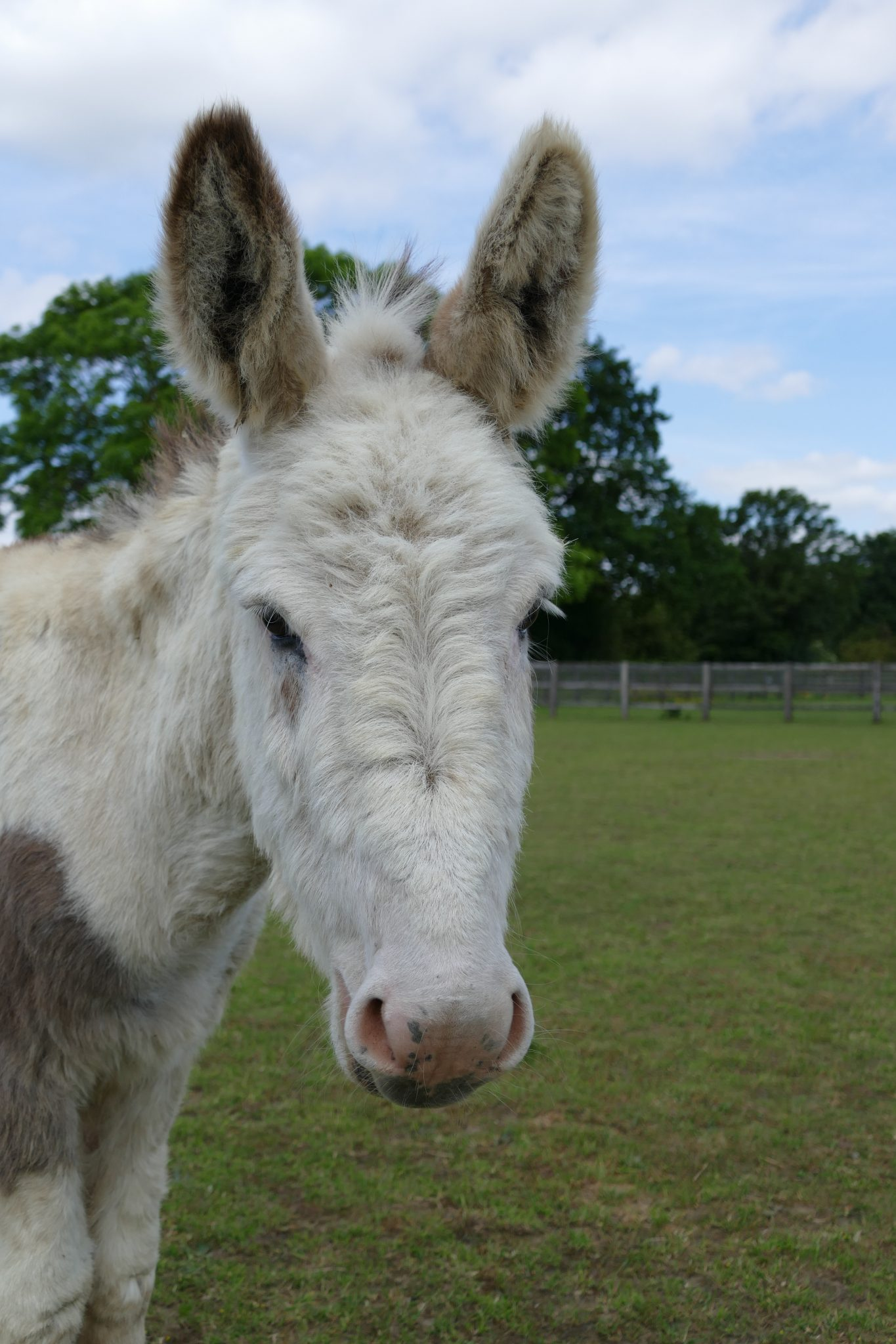 colin-wonkey-donkey-visitors-centre