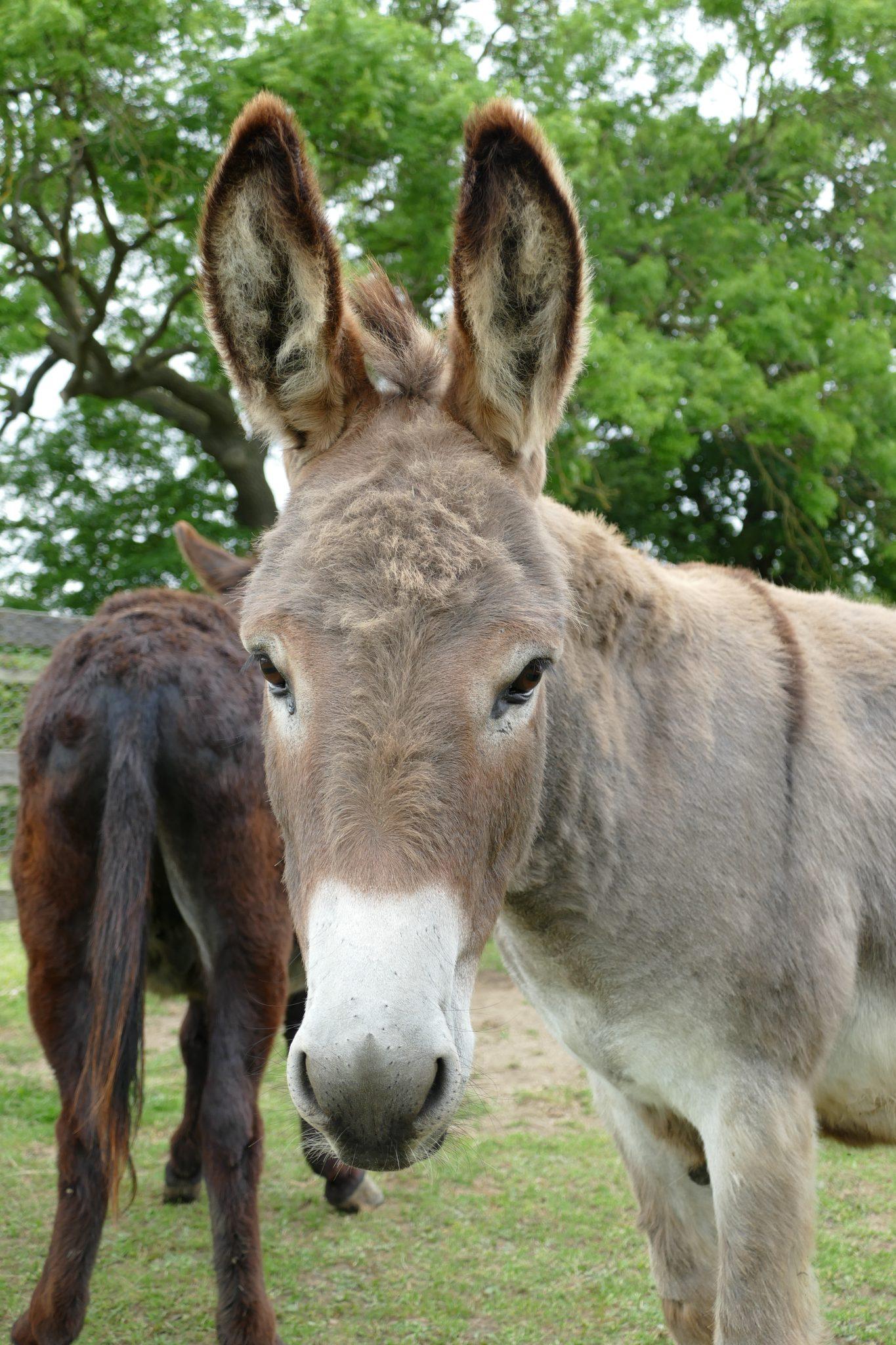 finn-wonkey-donkey-visitors-centre