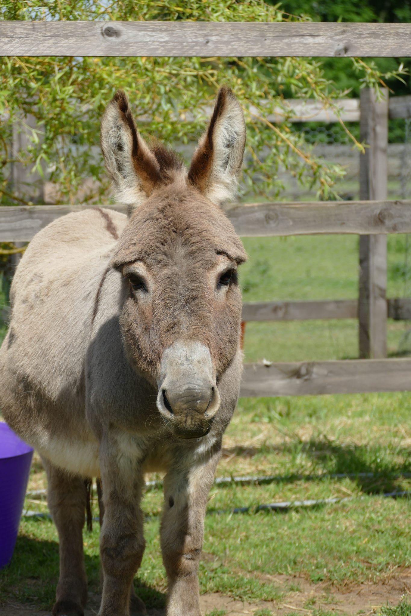 merlin-wonkey-donkey-visitors-centre