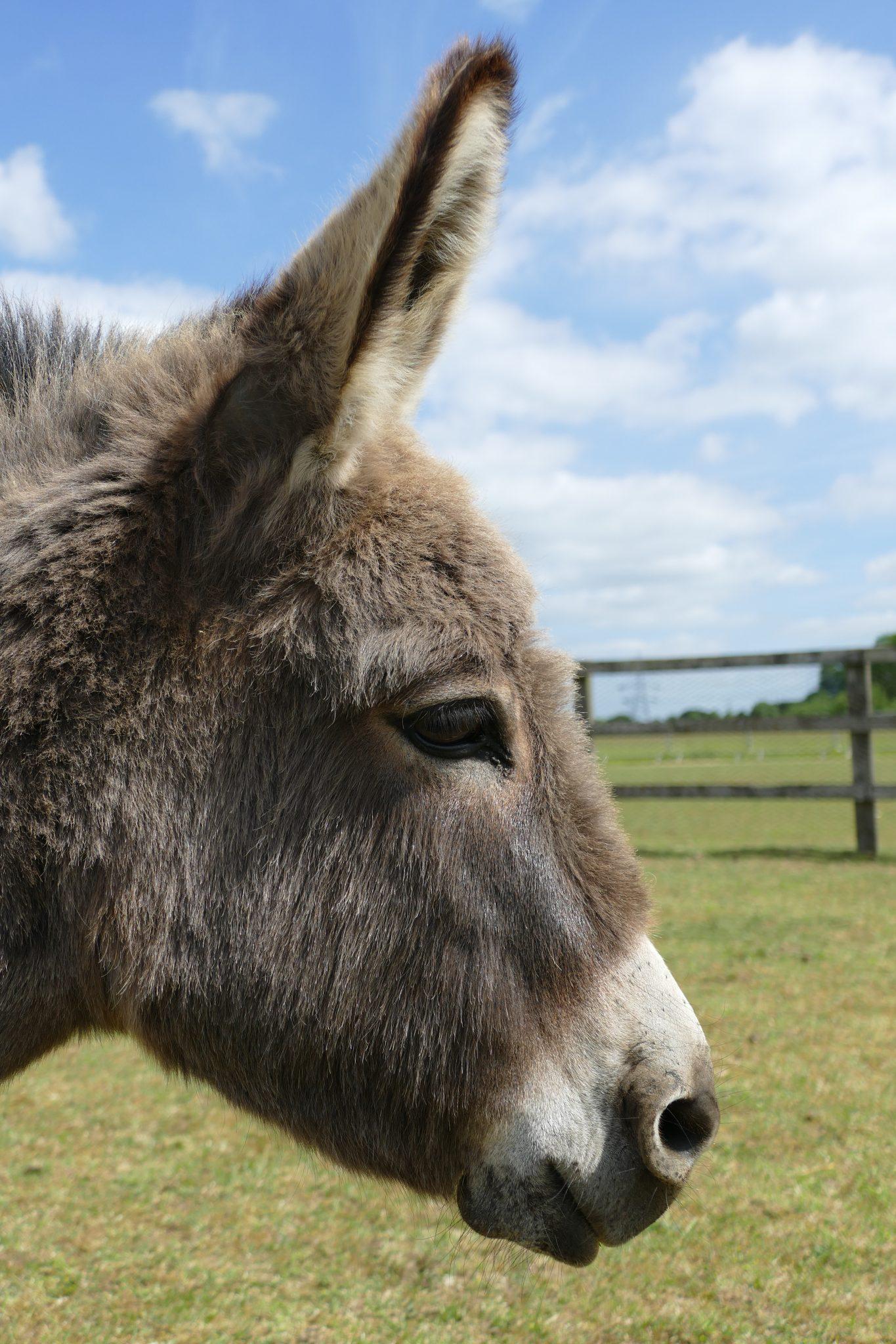 millie-wonkey-donkey-visitors-centre