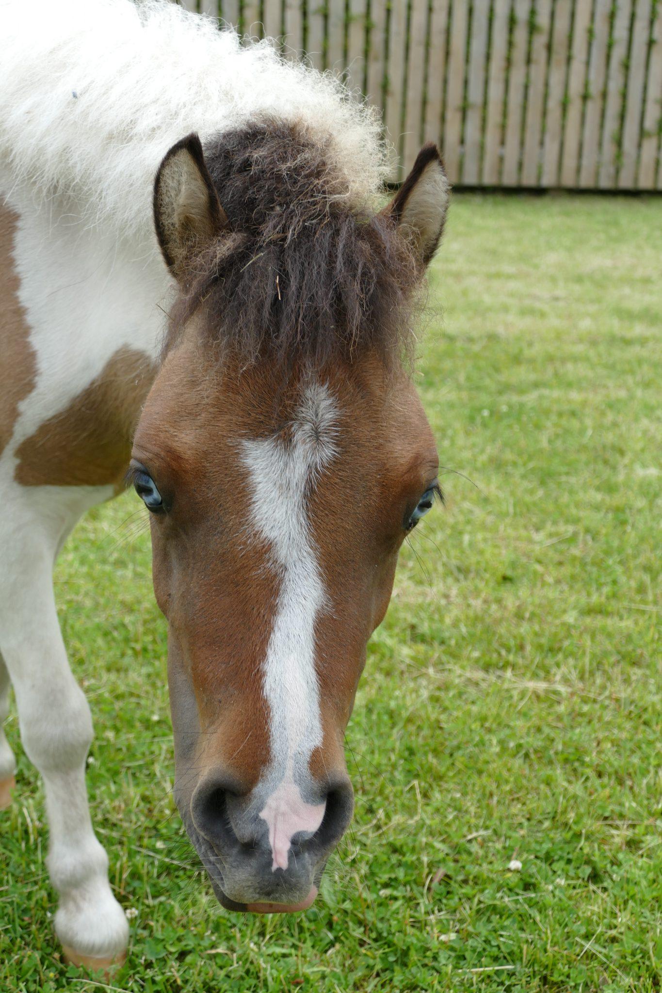minnie-wonkey-donkey-visitors-centre