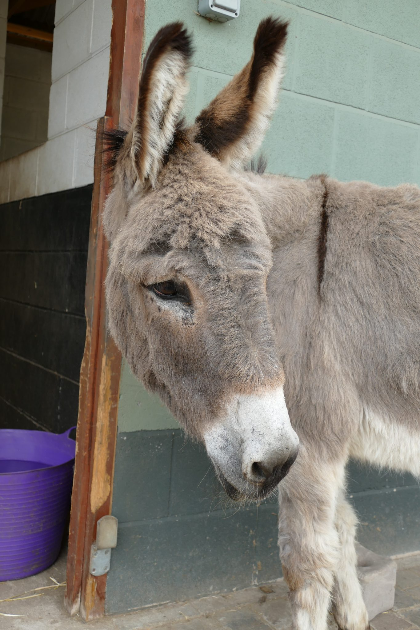 murphy-wonkey-donkey-visitors-centre