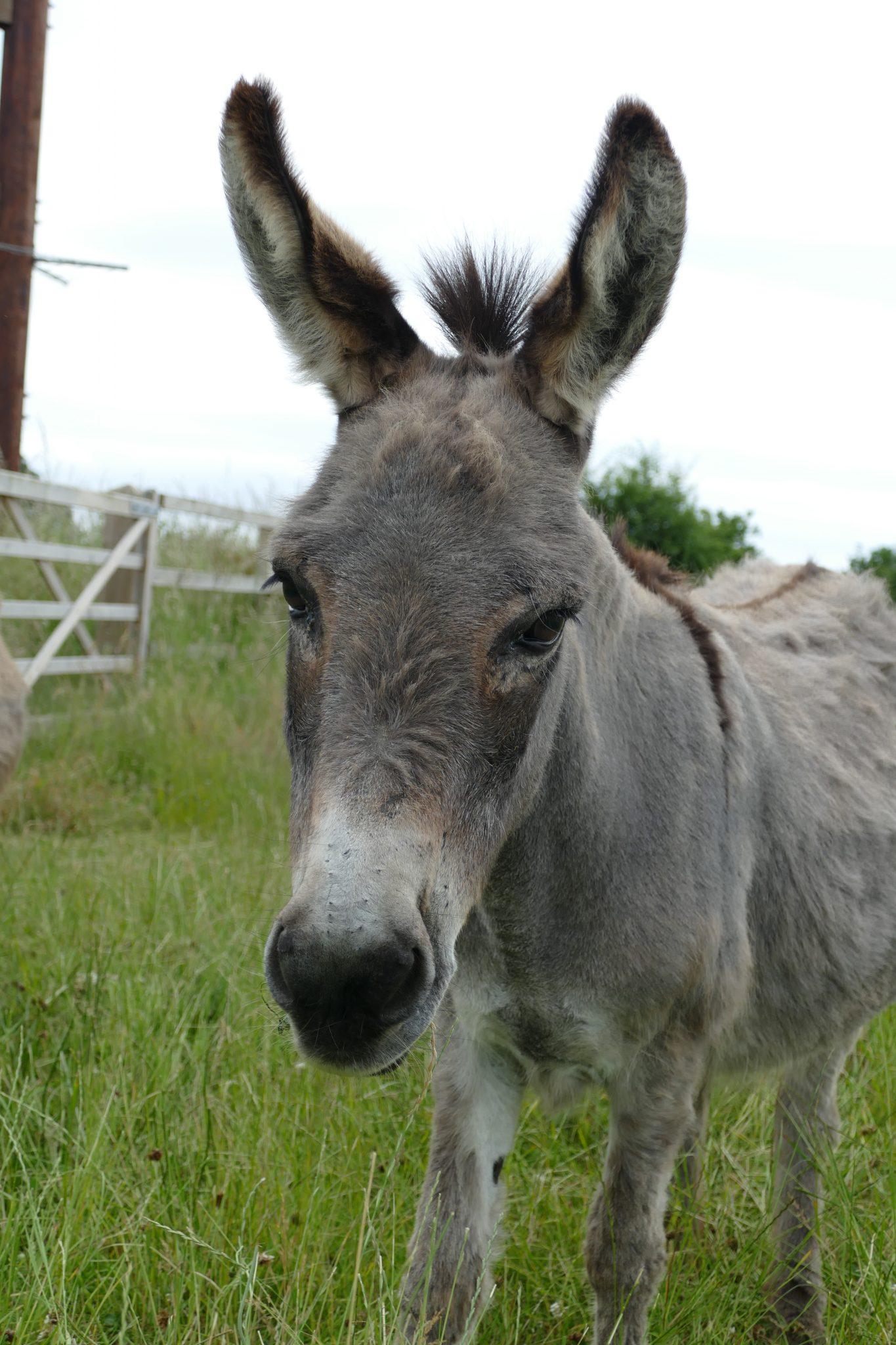 starlight-wonkey-donkey-visitors-centre