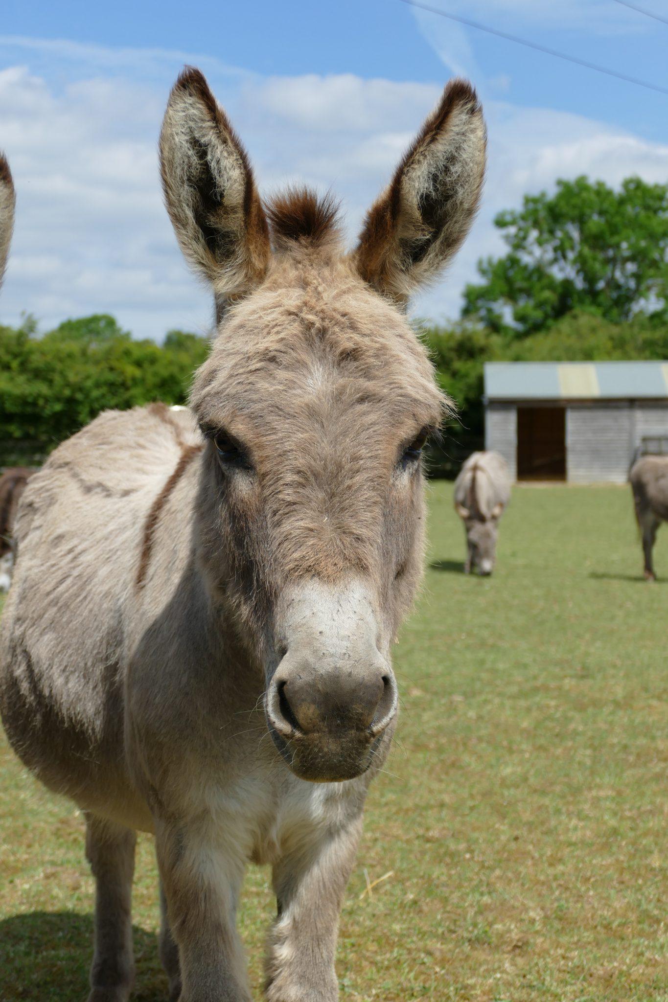 toby-wonkey-donkey-visitors-centre